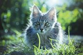 Kitten On The Nature Close-up. Little Kitten Sitting In The Grass. poster