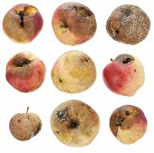 The Rotten Spoiled Inedible Apples Set