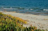 Постер, плакат: Песок растительности вблизи моря Греция