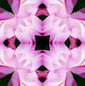 Seamless Symmetrical Pattern Abstract Purple Orchid Texture poster