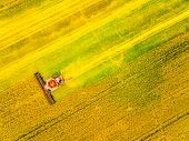 Aerial view of combine harvester on rapeseed field. Agriculture and biofuel production theme. poster