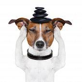 Hund-meditation