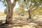 Oasis de Outback australiano