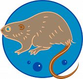 pic of muskrat  - stylised drawing of a muskrat - JPG
