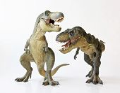 stock photo of tyrannosaurus  - A Tyrannosaurus Rex Pair Face Off Against a White Background - JPG
