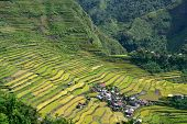 Rice terraces in Batad valley in the Philippines