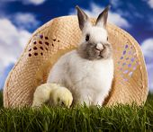 Easter, bunny and chick on green grass