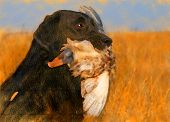 stock photo of duck-hunting  - oil painting portrait of hunting black labrador with duck - JPG