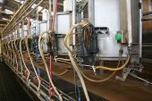 stock photo of suction  - Milking barn equipment background for a dairy farm - JPG
