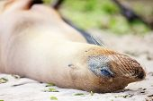 Portrait of sea lion lazing at beach