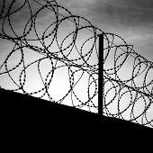 Barbed Wire On Dark Fence. Monochrome Shilouette Photo