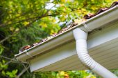 foto of downspouts  - Marple leaves in gutter fall time horizon format - JPG