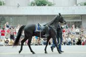 Caballo sin jinete en Washington Dc Memorial Day Parade