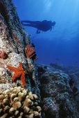 Starfish Wall