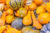 Squash And Pumpkins From The Market