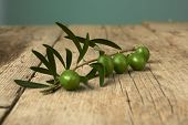 Green Olive Branch On Wooden Table.