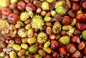 stock photo of beechnut  - Colourful fall detritus of horse chestnuts acorns beechnuts and cobnuts as a natural background - JPG