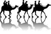 Camel?s caravan
