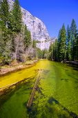 Yosemite Merced River and el Capitan in California National Parks US