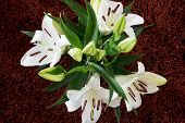 Bouquet Of Blooming White Lilies