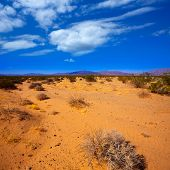 Mohave desert in California Yucca Valley USA