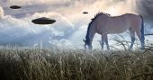 foto of starship  - Horse grazing with UFOs floating nearby - JPG