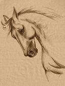 Horse Head Sketch