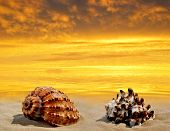pic of conch  - Conch shell on beach in the sunset - JPG