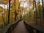 Forest Boardwalk at Brandywine Falls in Ohio.