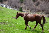 Horse running in mountains