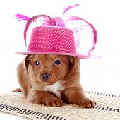 Puppy In A Hat On A Rug.