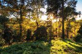Stunning Vibrant Autumn Landscape Of Sunburst Through Trees In Forest