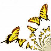 Kaleidoscopic Butterflies Illustration