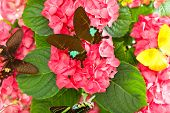 Pink Flowers With Colorful Butterflies