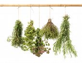 Hanging Bunches Of Fresh Herbs Isolated On White