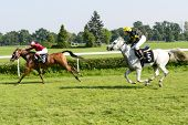 WROCLAW, POLAND - SEPTEMBER 6: Race for 3-year-old Arabian horse group II on 6 September 2014 in Wroclaw, Poland. In the photograph can be seen horses Cassini no. 5 and winner Elaria no. 9.