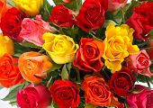 Bouquet Of Colorful Fresh Assorted Roses