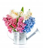 Narcissus And Hyacinth. Spring Flowers Over White