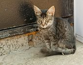 Tabby homeless kitten sitting in front of the Iron Door