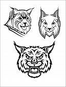 Wild bobcat or lynx mascots