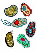 Amebas, amoebas, microbes and germs set