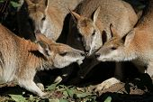 Wallaby Conference