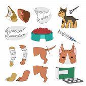 Veterinary Illustrations