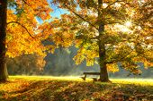 Autumn scenery with trees and bench in sunshine