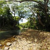 Canopy Of Trees Covering A Stream In A Jungle