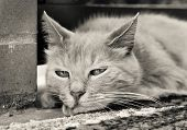 Close-up Portrait Of Sad Ginger Cat Outdoors