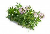 pic of origanum majorana  - Savory bunch with flowers isolated on white background  - JPG