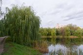 View On Pond In Moscow