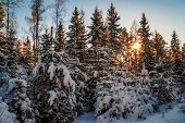Beautiful winter sunset near the forest. Nature background.