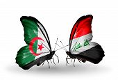 stock photo of iraq  - Two butterflies with flags on wings as symbol of relations Algeria and Iraq - JPG